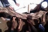 Amalan Kiai Sepuh NU yang Jasadnya Utuh Meski Sudah Dikubur 31 Tahun