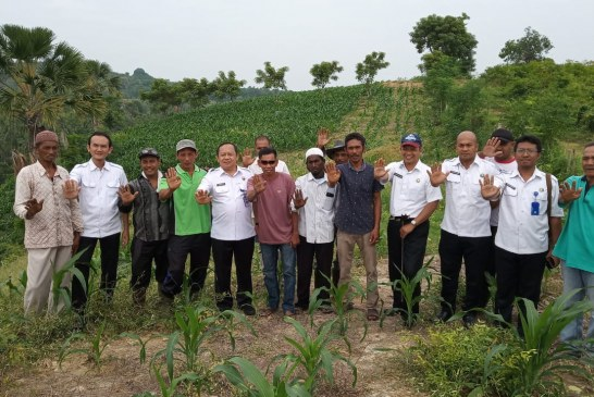 Petani Jagung Program Alternatif Development di Bireuen Berharap Bantuan Air dari Pemerintah