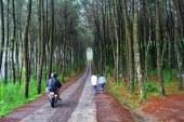 Destinasi Milenial di Borobudur