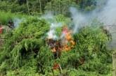 Tim BNN Babat 4 Hektare Lahan Ganja di Pegunungan Seulimun