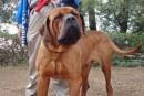 Gubernur Jateng Larang Warganya Konsumsi Daging Anjing, Apa Bahayanya Bagi Kesehatan?