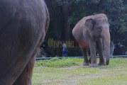 FOTO Taman Margasatwa Ragunan Dibuka Kembali