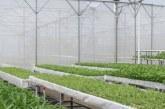 Sistem Penataan Agraria Berkelanjutan dalam Menyukseskan Reforma Agraria