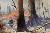 Perubahan Iklim, Dua Perlima Tanaman Dunia Terancam Punah!