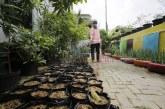 FOTO KWT Lakukan Perawatan Tanaman Sayur