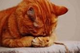 Ingat! Kucing Selalu Doakan Pemiliknya