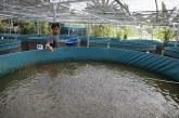 FOTO Budi Daya Ikan Lele di Kawasan Masjid Jami Al- Ikhlas