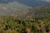 Langkah Kementerian ATR/BPN Mengkaji Sumber TORA dari Pelepasan Kawasan Hutan