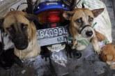 Presiden Korsel Larang Makan Daging Anjing Jadi Topik Pilpres